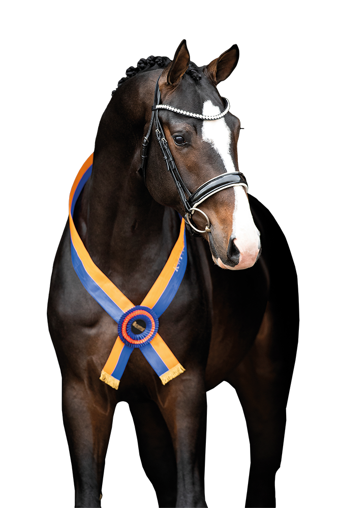 de dekbehoeve Kwpn sport horse dressage for sale